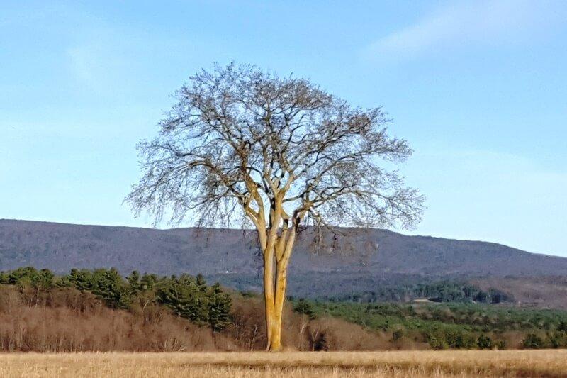 baldwin-hill-el