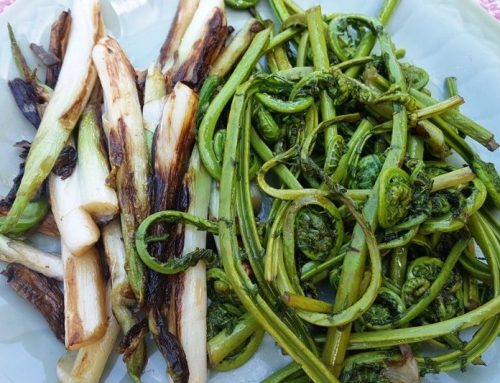 Foraging & fiddleheads